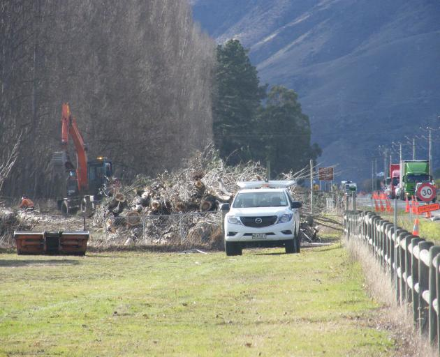Poplar tree felling was in full swing yesterday along State Highway 6 near Cromwell yesterday. Photo: Adam Burns