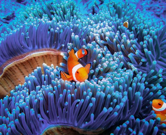 Increasing amounts of artificial light at night in coral reefs, even at relatively low levels,...