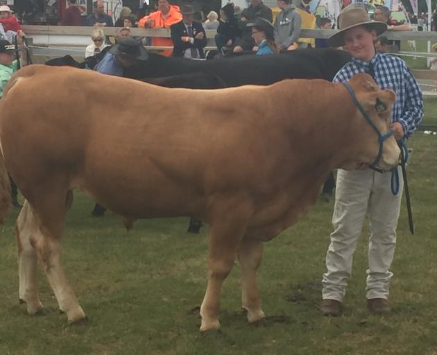 Charlie Herbert  leads a blonde d'Aquitaine bull at last year's New Zealand Agricultural Show.