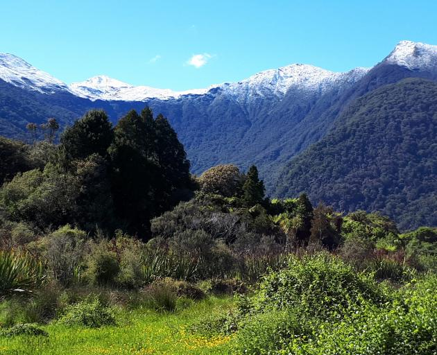 The Haast Tokoeka Sanctuary. Photo: Cassie Mealey