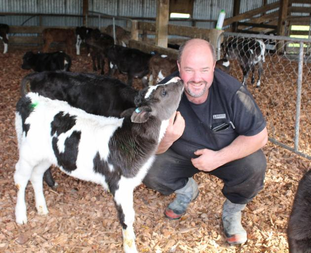 Lumsden dairy farmer Jason Herrick tends to his newborn herd during a busy calving season, a particularly high-pressure time for industry workers. Photo: Abbey Palmer