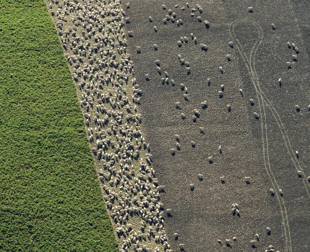 A taskforce group will meet soon to identify winter grazing issues and report back with solutions...