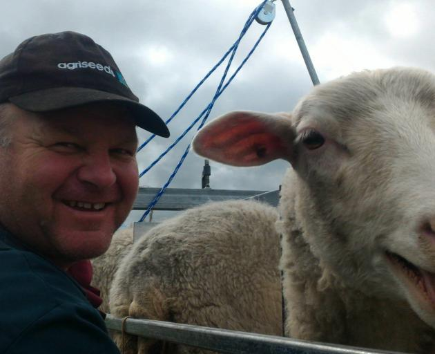 Allan Ramsay milks a contented-looking ewe this time last year. Photos: Supplied