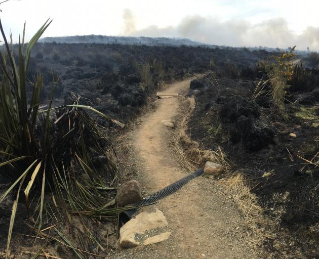 Burnt tussock on the Pineapple Track earlier today. Photo: Gerard O'Brien