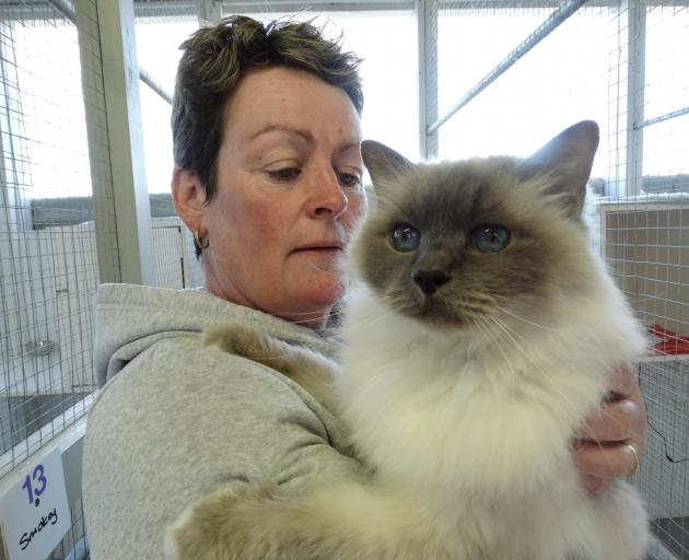 Paws a While co-owner Jill Campbell with Smokey the cat. The Oamaru cattery is fully booked for Christmas, and spaces are at a premium at others. Photo: Daniel Birchfield