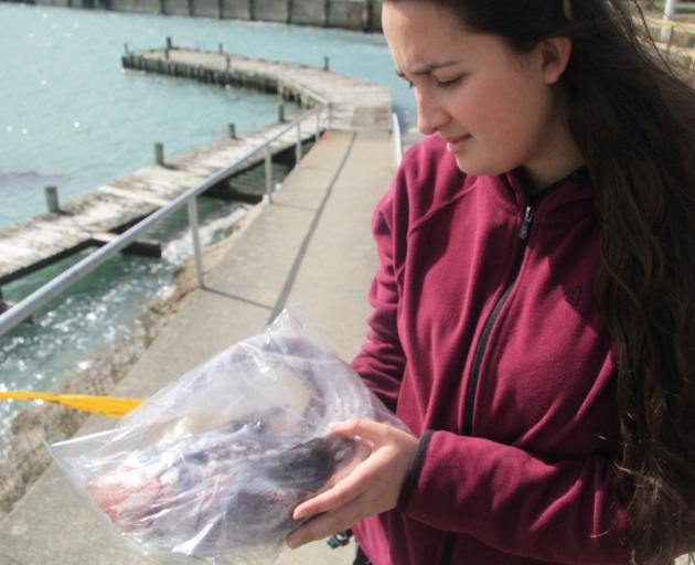 LeopardSeals.org research assistant Giverny Forbes has a look at a fish that might be part of a...