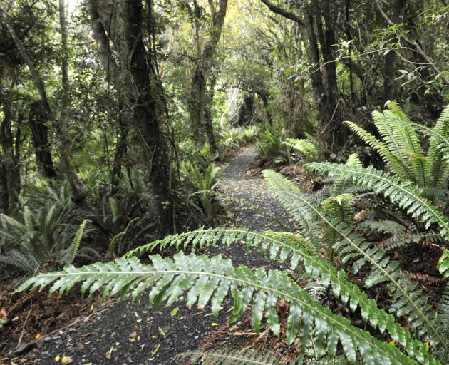 A loop track at Orokonui Ecosanctuary. Photo: Gerard O'Brien