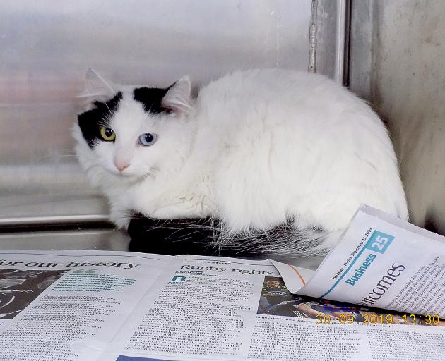 This cat, along with two others, who didn't survive, was found soaking wet in a box near Kennedy...