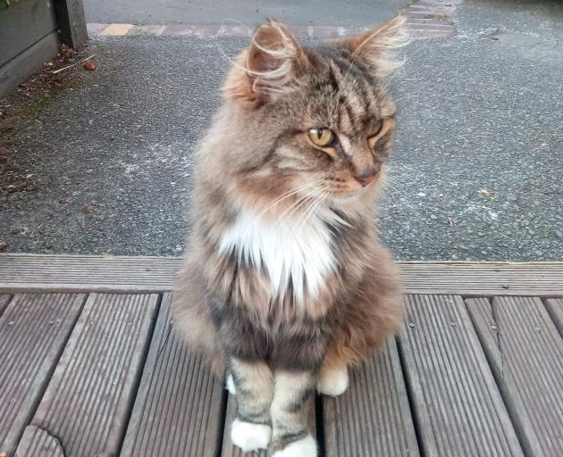 Somerfield resident Philip Sheehan is concerned with the number of cats going missing in the area...