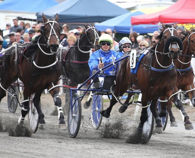Spankem, trained by well-known Canterbury-based trainers Mark Purdon and Natalie Rasmussen, on his way to winning last year's Kaikoura Cup. Photos: Harness Racing New Zealand