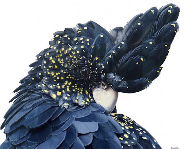 Black Cockatoo, by Laura Hardie