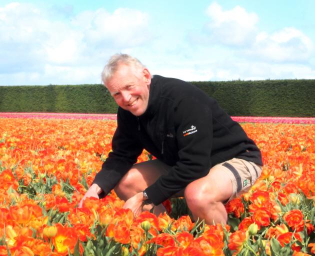 Triflor NZ Operations manager Rudi Verplancke says the combination of fertile soils, good drainage and temperatures mean Southland is perfect for growing tulips. Photo: Luisa Girao