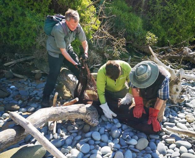 Mr Fyfe, Doc ranger Tom Burlinson and Mr Cox secure the animal before removing the fishing line.