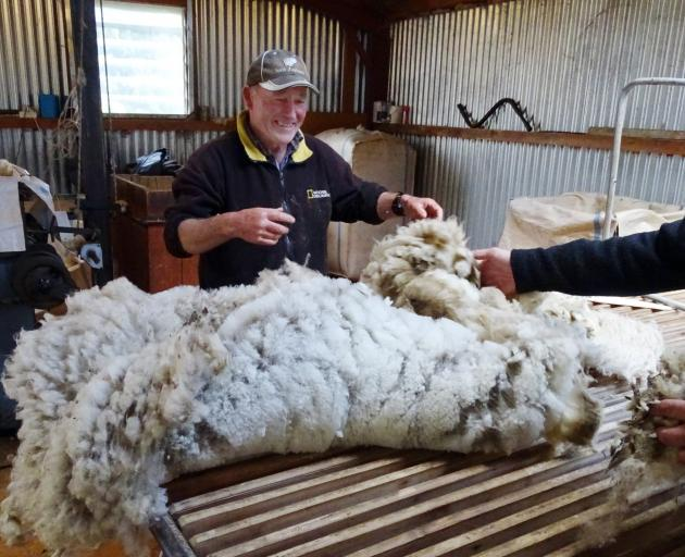 Queenstown farm manager Roy Webb deals with a freshly-shorn fleece.  PHOTO: TRACEY ROXBURGH