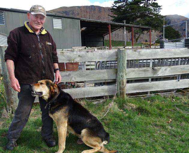 Sheep dog Brock with owner Roy Web during the 2015 Queenstown Winter Festival. PHOTO: ODT ARCHIVES