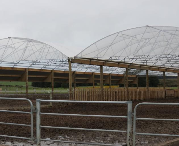 The large sheltered feedpad is a key element for the success of the Waikite property's full time...
