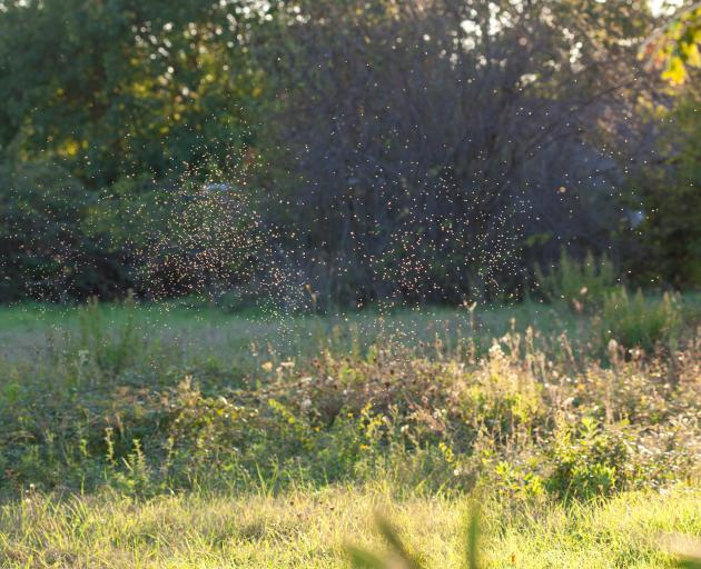 Nine thousand native shrubs will be planted in beside the Bromley oxidation ponds in a bid to...