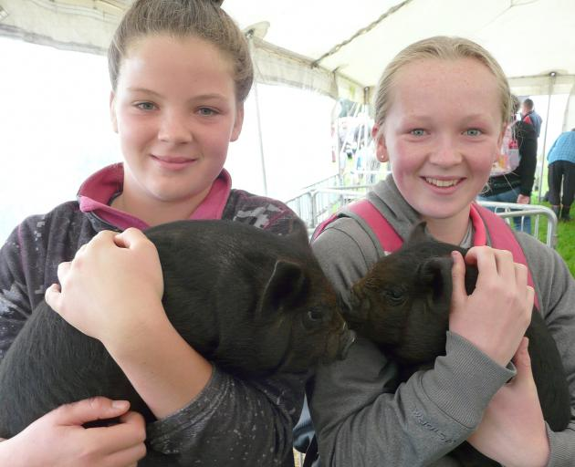 Leila Hill (12, left) and Neeve Kean (13), of Tapanui, and their kunekune piglets.