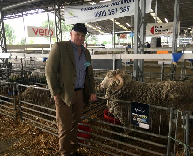 Scottish farmer and cattle judge John Scott admires Merino sheep entered by the Armidale Sheep Stud from Central Otago. Photo: David Hill