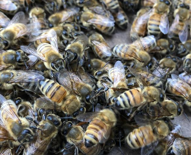 Southland is experiencing bee swarms as the warmer weather hits.