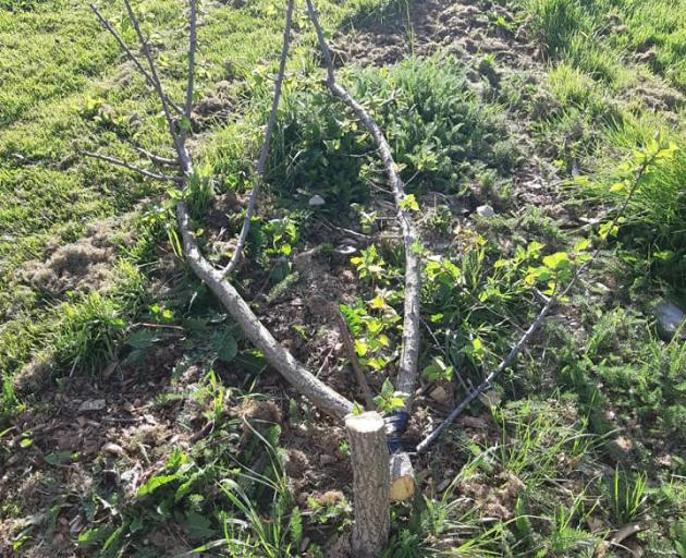 Several fruit trees were destroyed by vandals. Photo: Supplied