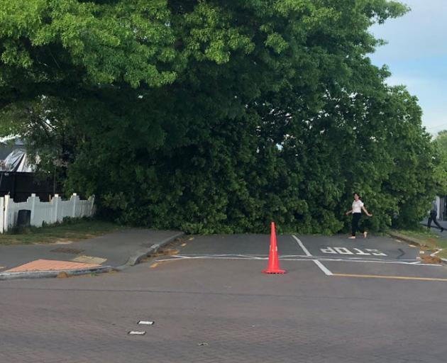 The tree has blocked the road on Matai St. Photo: CTOC