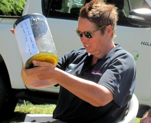 Mid Canterbury's Kai Tegels checks out drone fly larvae specimens during the Drone Flies and Pollination session at the Foundation for Arable Research's arable research in action day recently. Photo: Toni Williams