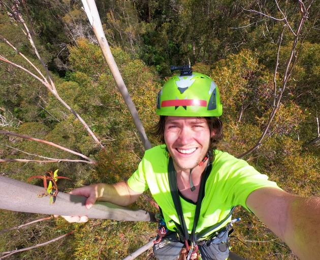 Enjoying the view from the top of New Zealand's tallest tree. Photos: Jacob McSweeny