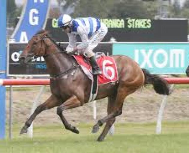 Supera is the horse to beat in the Captain Cook Stakes at Trentham today. Photo: Supplied.