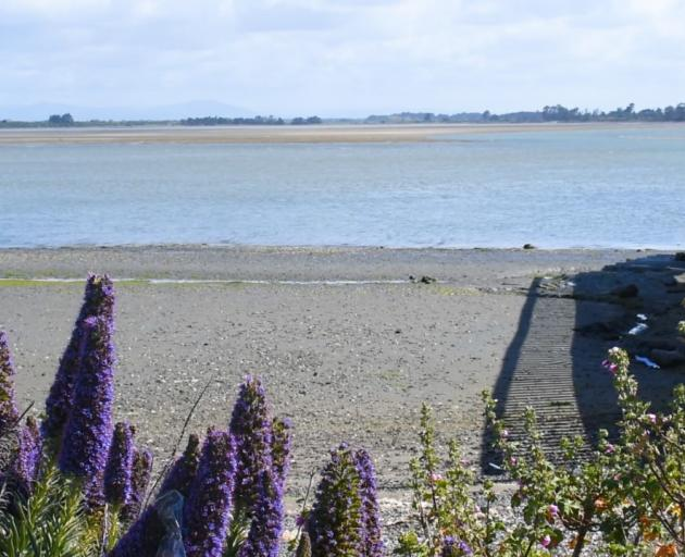 The Avon-Heathcote Estuary Ihutai Trust says their volunteers have done a great amount of work...