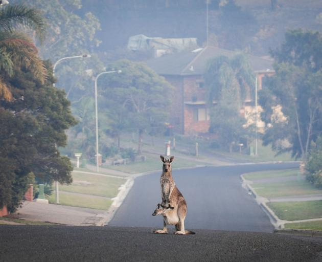 Not all wildlife have adapted to stay put after a fire, and moving in search of a safe haven might be the best option. Photo: Getty Images