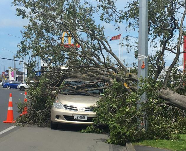 A tree toppled on to a parked car outside McDonald's in Andersons Bay Rd, Dunedin, yesterday....