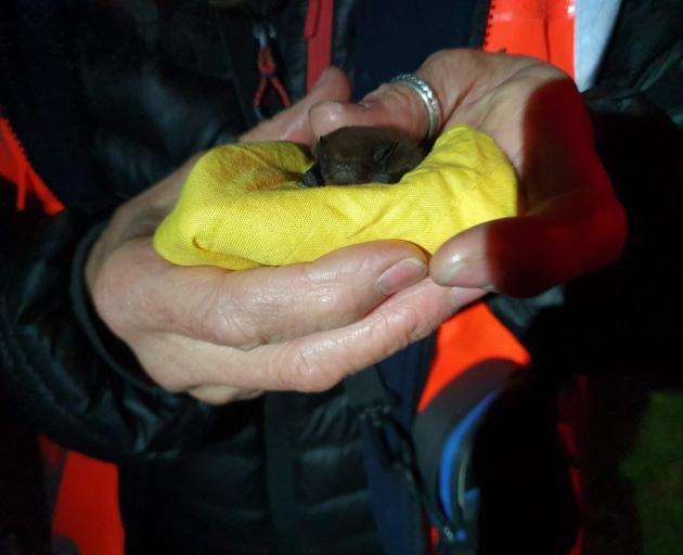 Catriona Gower holds the catch of the night, a long-tailed bat.