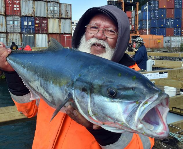 Wellington pastor Peter Tuisano holds a 11.34kg (25lb) kingfish he caught in Otago Harbour...