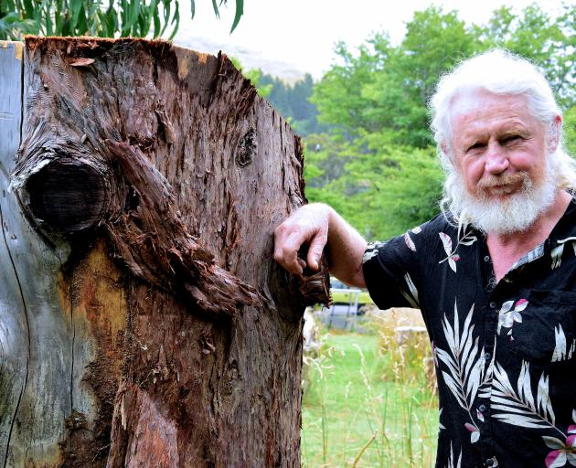 """""""Shape maker"""" Andrew Lyons contemplates his next work, to be made using this large redwood trunk...."""