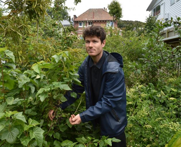 For more than 10 years Rory Harding has been growing and tending to an urban orchard in the back...