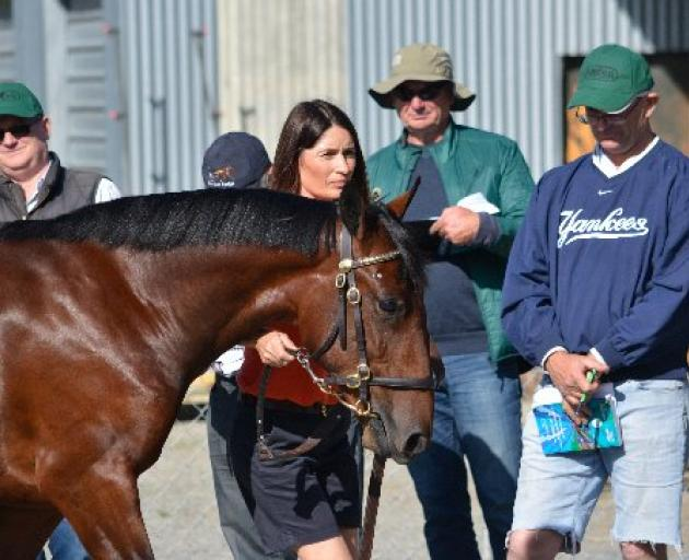 Katrina Price parades her Bettor's Delight colt from Democrat Party at this week's Southern Bred Southern Reared yearling sales tour. Photo: Jonny Turner