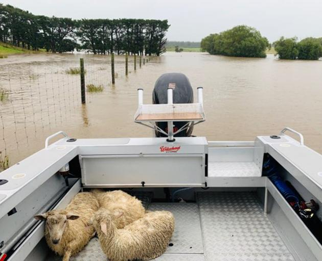 Nathan and Kellie Grant, of Hedgehope, used the family boat to rescue three lambs on their flooded farm on Tuesday. Photo: Supplied