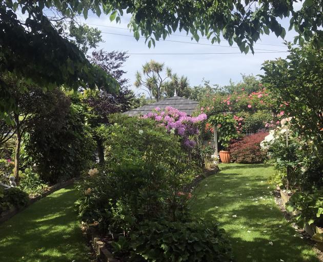 The garden has a cool look on hot days. Photos: Gillian Vine