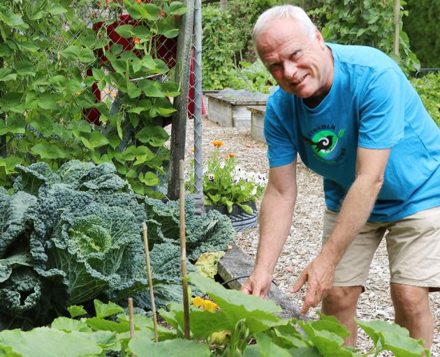 Dave Fitzjohn helps to manage the community garden with the Lincoln Envirotown Trust. Photo:...