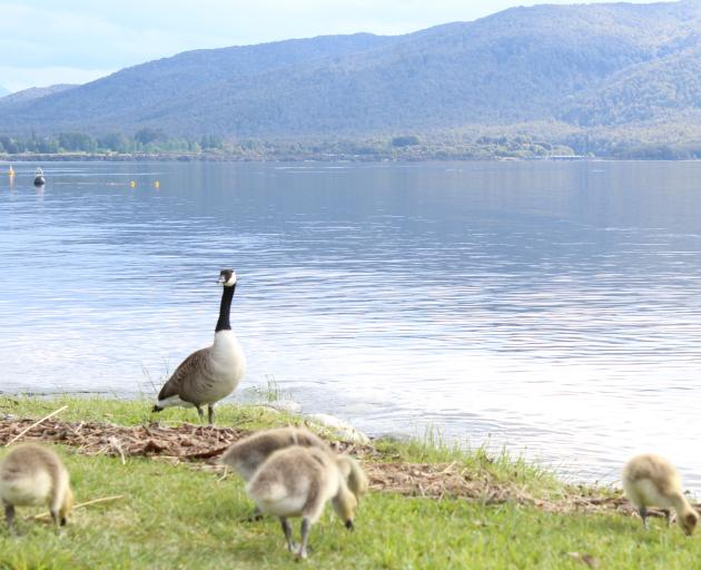 Destination Fiordland manager Madeleine Peacock says lakeside living attracts people to Te Anau....