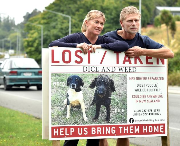 Louisa Andrew and Alan Funnell stand by the sign of their lost dogs yesterday. The sign has been put up beside the busy Caversham Valley Rd. Photo: Peter McIntosh