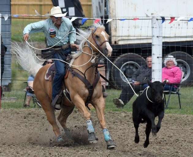 Cowboy Marcus Spencer-Bower, of Rangiora, ropes a calf at the 61st Outram Rodeo on Waitangi Day....