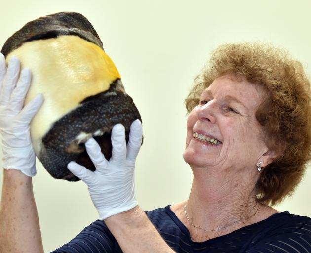 Canadian donor Laurie Hardy yesterday holds a rare emperor king penguin skin muff, made in...