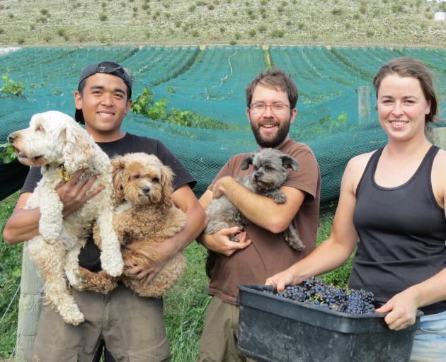 Quartz Reef vineyard interns (from left) Joel Welander, of Sweden, Raphael Servin, of France, and...