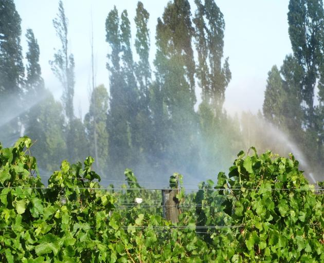 Grape vines being irrigated in Central Otago. PHOTO: MARK PRICE