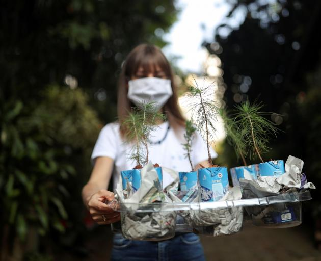 Fabiana Tchalian, co-founder of Agua na Caixa (Water on the Box), carries seedlings for planting...