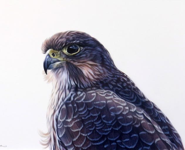 NZ Falcon, by Karen Baddock