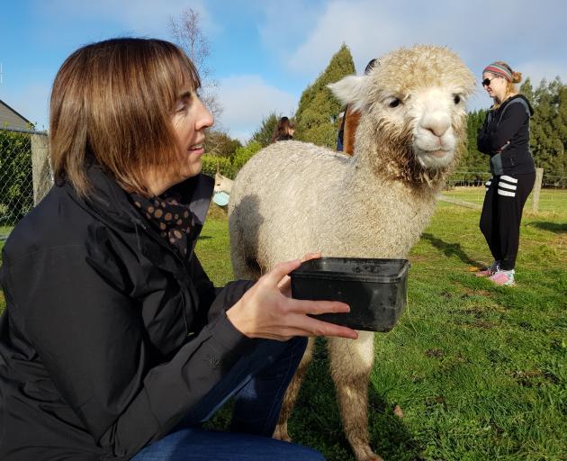 Invercargill woman Helen McEwen feeds Burns, the alpaca, at Kepler Mountain View Alpacas in Te...