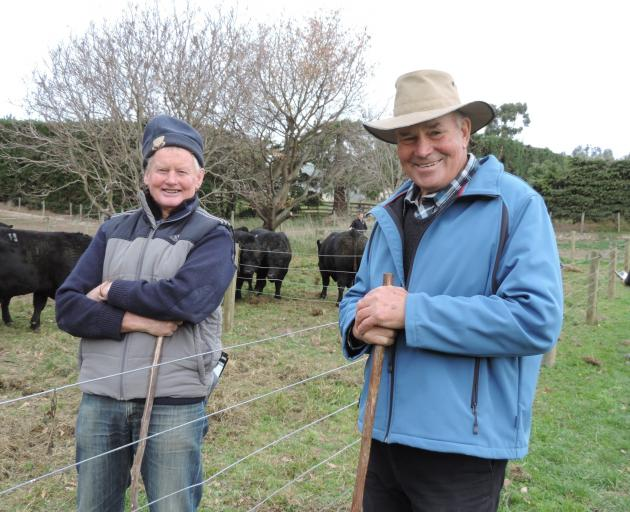 Norman McKenzie, of Duntroon (left) and Bruce McNab, of Weston, were helping move the bulls into...